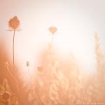 Nature by Guido Tamburro